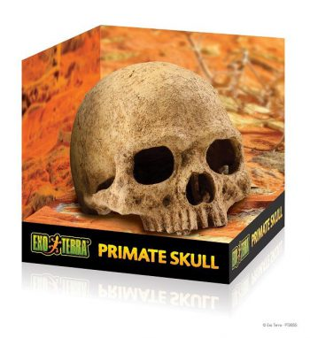 pt2855_primate_skull_packaging-1