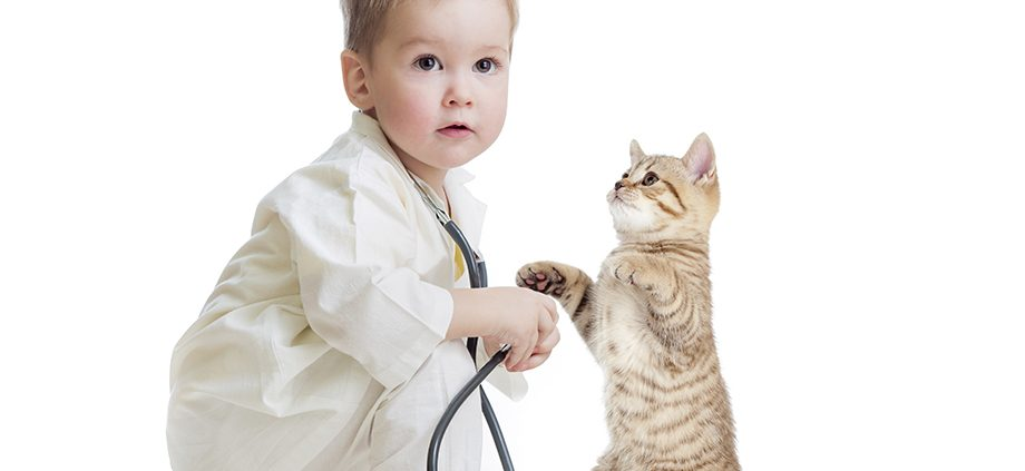 kid or child playing doctor with stethoscope and cat