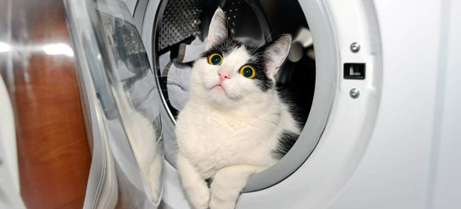 WashingMachineCat_54913309_xl-2015-scaled-e1581609190327