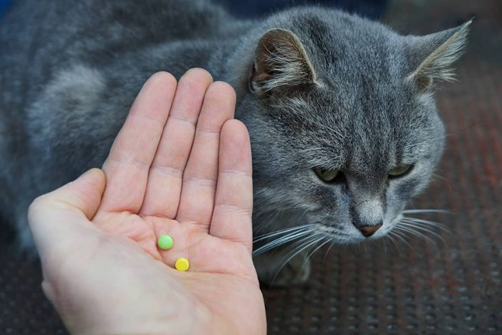 hand-holds-out-pills-for-cat-SW