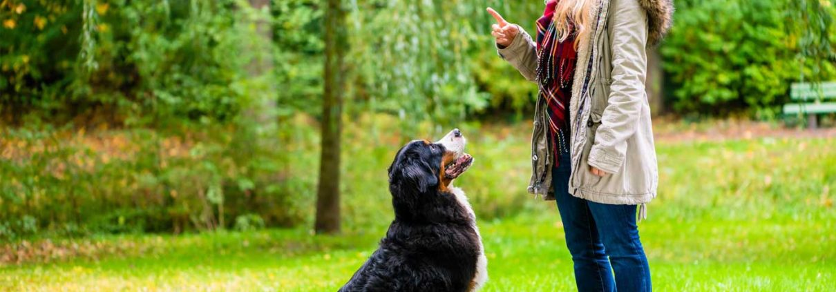 Obedience-Training-Why-Bother